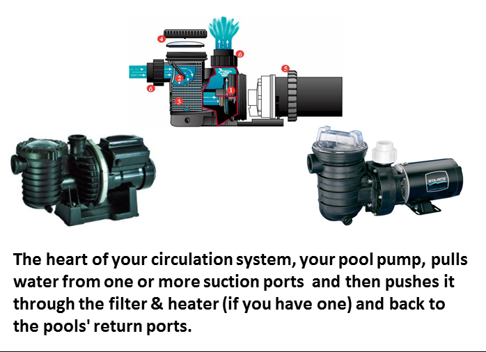 Pool Pump swimming pool pumpsswimming pool bio sanitizer speck pool pump wiring diagram at nearapp.co